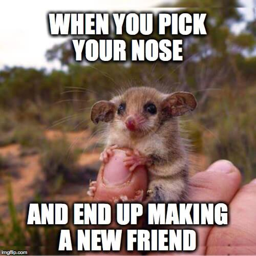 meme 13 the meme ing of life itty bitty mouse