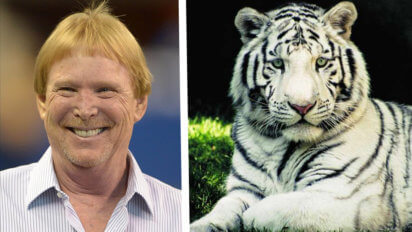 "Poor Taste? Raiders Change Name To ""Vegas Tigers That Bit Roy"""