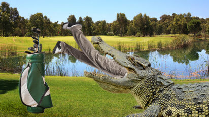 A Tradition Unlike Any Other: Crocodile On 12th Hole Eats Winner Again