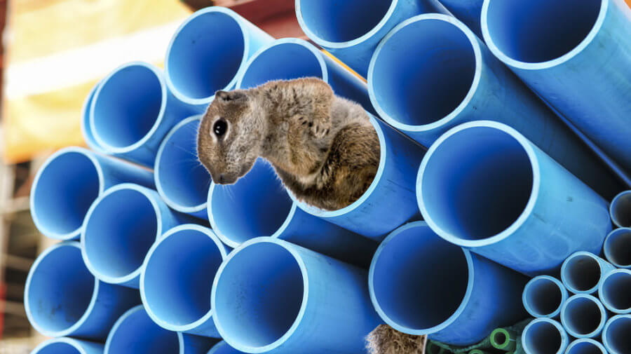 Is Your Internet Down? A Squirrel May Be Stuck In Your Internet Tube