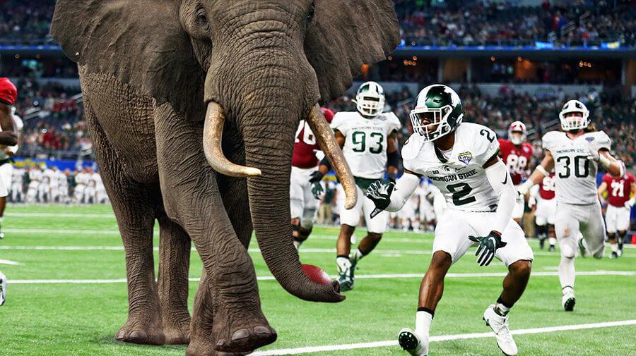 Elephant-Alabama-900x505.jpg